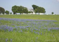 Farmstead with Bluebonnets
