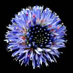 """Botanic Garden 060"" by peterivron"