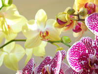Orchids Flowers art prints Floral Botanical