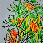 """Lilies"" by ThomasJoseph"