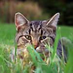 """""""hiding cat"""" by erinlanzendorfer"""