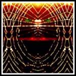 """spider web"" by jreynolds"