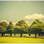 """Hampton Court Palace Gardens Triangular Trees"" by RunnyCustard"