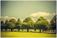 Hampton Court Palace Gardens Triangular Trees