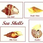 """Sea Shells"" by vigliotti"