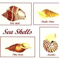Sea Shells Art Prints & Posters by Michael Vigliotti
