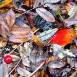 """""""AutumnEarth"""" by kvalka"""