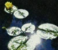 yellow waterlily sunglow Monet style