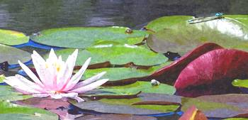 waterlily dragonfly and snail oil