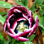 """""""Spring Unfolding"""" by maureenmarieltd"""