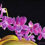"""PurpleOrchids"" by jonathanwangsgard"