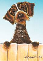 Wirehaired Pointing Griffon Portrait