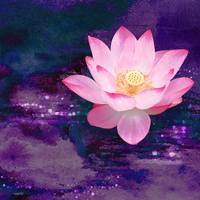 Lightness finds the Lotus