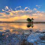 """""""Pulau Di Tengah Bendang"""" by AriefRasa"""