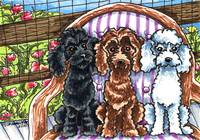 Miniature Poodles Timeout