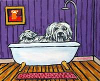 Havanese Taking a Bath