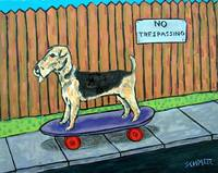 Airedale pon a Skateboard