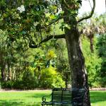 """Bench Under the Magnolia Tree"" by Groecar"