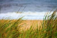 Grass on the Dunes 2