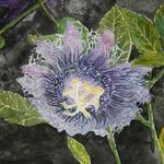"""passion flowers purple art print"" by derekmccrea"
