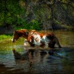 """waterhorse_001"" by westinimages"