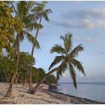 """Palmetto Bay, Roatan Island"" by TimFitzharris"