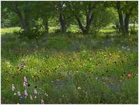 Wildflower meadow at Jacksonport State Park, Arkan