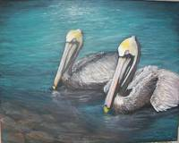 Pelicans in the Water
