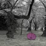 """20120316_DC_CherryBlossum_0008"" by FarleyPics"