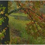 """Wilton Landing, Millwood Lake State Park, Arkansas"" by TimFitzharris"