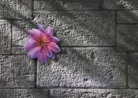 flower on stone wall