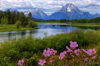 Sticky Geraniums and Mount Moran