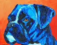 Blue Boxer Dog