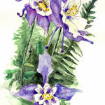 """Columbine Flowers Painting"" by BlendaStudio"