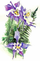 Columbine Flowers Painting