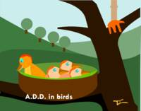 A.D.D. in the Bird World