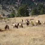 """Elk at Mary"