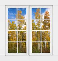 Autumn Aspen Forest White Window Frame View