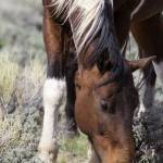 """_MG_0524.Wild Horse"" by SamSherman"