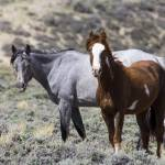 """_MG_0486.Wild Horses"" by SamSherman"