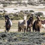 """_MG_0213.Wild Horses"" by SamSherman"