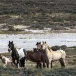 """_MG_0204.Wild Horse Herd"" by SamSherman"