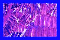 Blue Autumn 2 with Blue Border