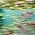 """Lily Pond Impressions"" by JessicaJenney"