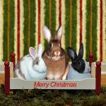 """""""Three Bunnies At Christmas"""" by DBell"""