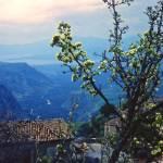 """Spring Blossoms, Delphi, Greece 1960"" by PriscillaTurner"
