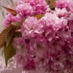 """""""Tree Blossoms"""" by patriciaschnepf"""