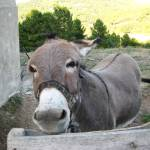 """""""C:\fakepath\2011 15 Sep Donkey"""" by CarrieWaters"""