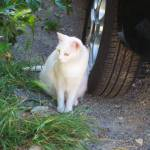 """""""C:\fakepath\2013 6 Jun One cat 01"""" by CarrieWaters"""