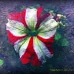 """BeFunky_flower PIC 1105"" by bigrock99"